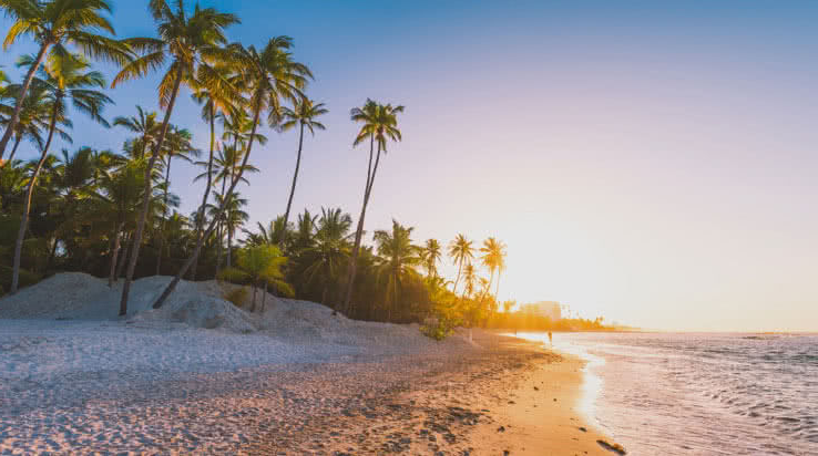 Tropical beach sunset with palm trees