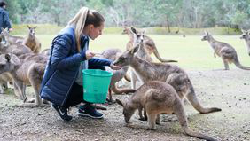 Woman who gave up dream job to travel feeding kangaroos